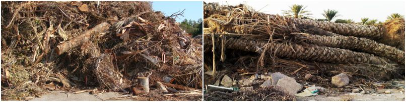 biomass energy for wood pellet production