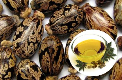 make oil from castor beans