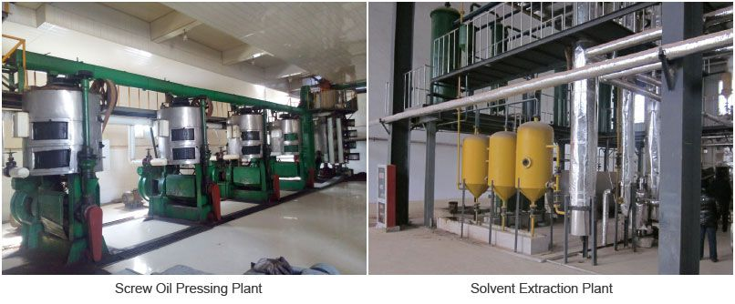 corn oil extraction plant for automatic edible and cooking oil mill