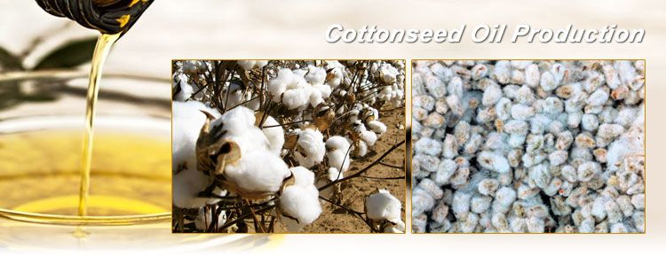 cottonseed oil production business plan