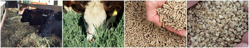 different kinds of animal feed