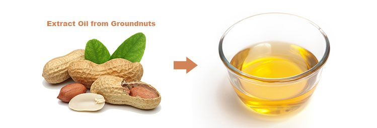extract oil from groundnuts