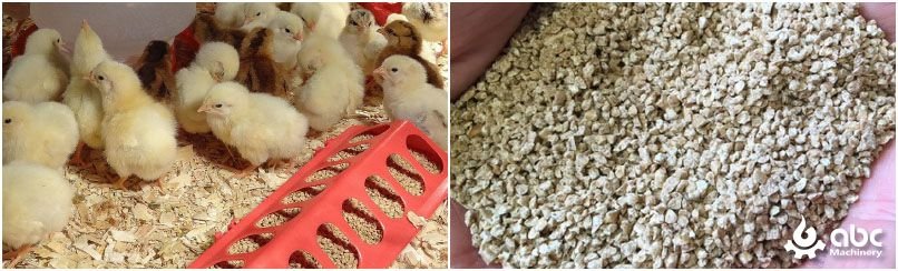 crumble feed for chicks