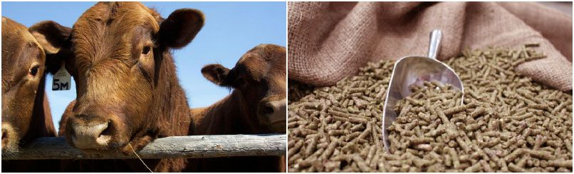 make animal feed pellets for 6 months cattle and cow