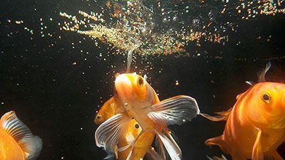 floating fish feed in water