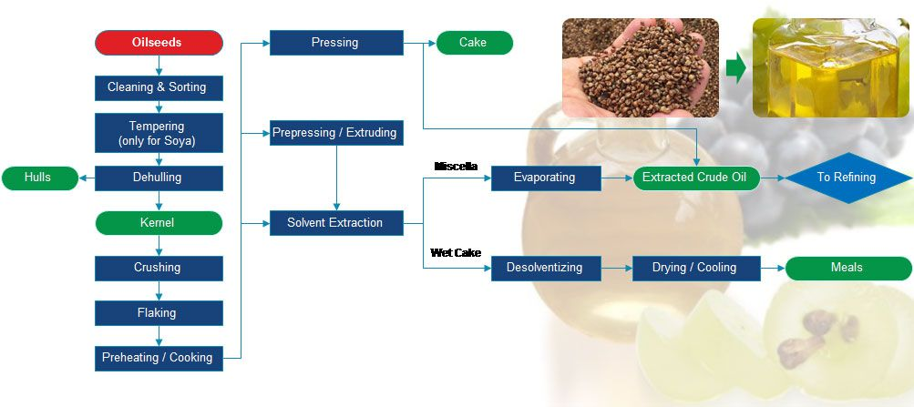 grape seed oil extraction process
