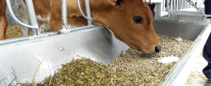 make complete feed pellets for your cattle