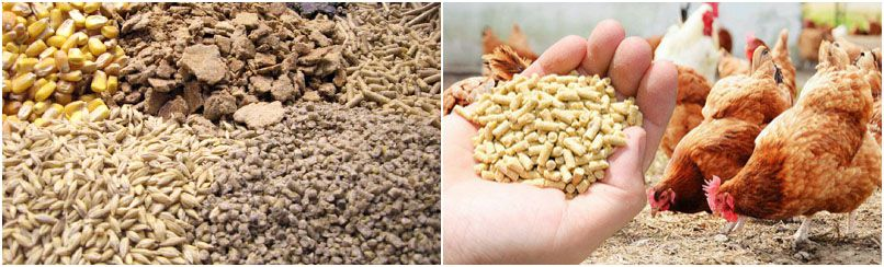 make feed pellets for layer chicken and Broiler chicken