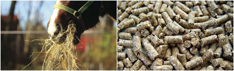 start a company for making livestock feed pellets
