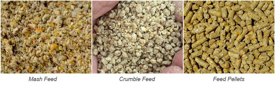 poultry feed types, mash feed, crumble feed and pelletized feed