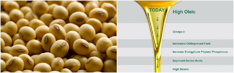 soybean oil production