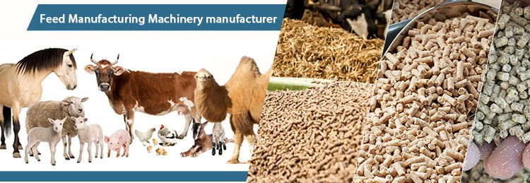Start Livestock Feed Production Business