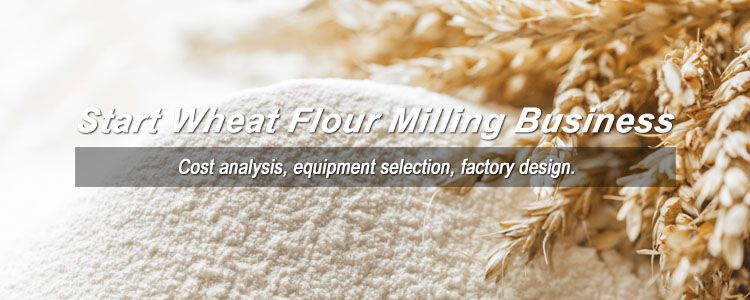 how to start wheat flour mill business